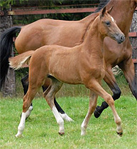 Filly by Triomphe de Muze